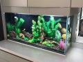 www.customfishtanks.co.za - custom fresh water aquarium