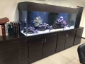 www.customfishtanks.co.za - custom reef tank