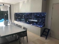 www.customfishtanks.co.za - custom salt water aquarium