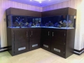 www.customfishtanks.co.za - custom salt water aquarium 2