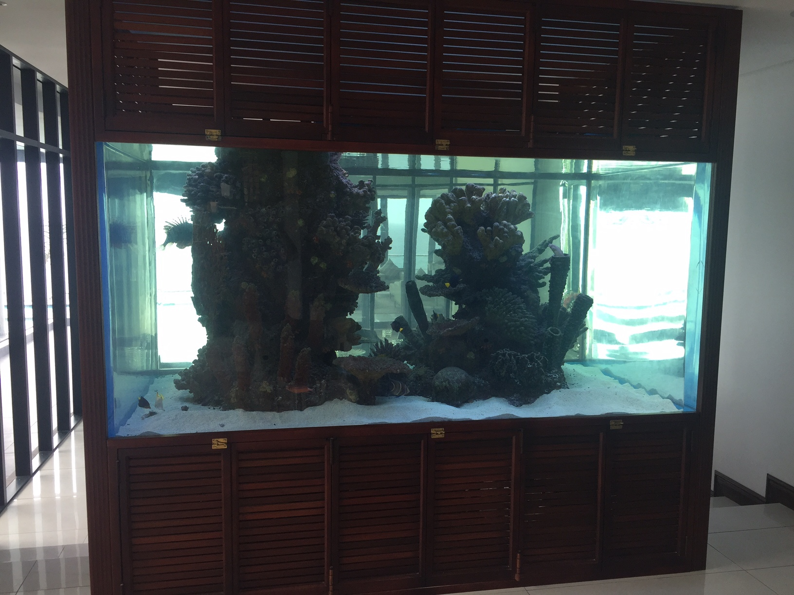 Fish tanks for sale cape town lighting for fish tanks for Unique fish tanks for sale