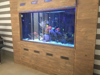 Maintenance of a custom fish tank