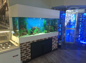 Custom Aquariums In Fish Tank