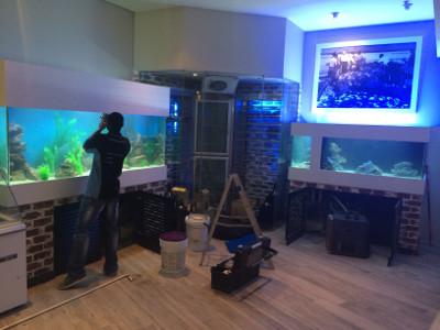Custom Fish Tanks Aquariums We Build And Maintain Fish Tanks